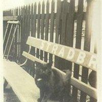 RN Railway cat.jpg