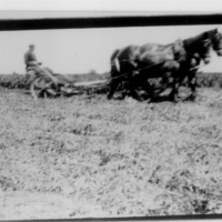 Valley Farm harvest12  AR.jpg